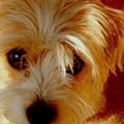 Adorable Daisy Poster