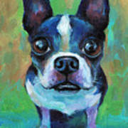 Adorable Boston Terrier Dog Poster