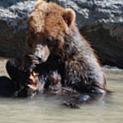 Adorable Grizzly Bear Playing With A Maple Leaf While Sitting In Poster