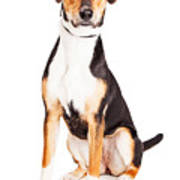 Adorable Young Mixed Breed Puppy Dog Poster