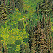 Aerial View Of Forest On Mountainside Poster