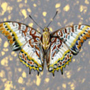 African Butterfly Poster