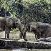 African Elephants_hdr Poster