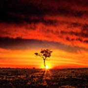 African Sunset Poster
