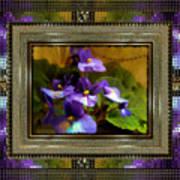 African Violet Poster