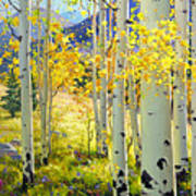 Afternoon Aspen Grove Poster