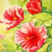 Afternoon Hibiscus Poster