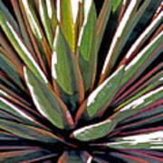 Agave Impressions 1 Poster
