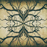 Aged Sepia Tree Dual Poster