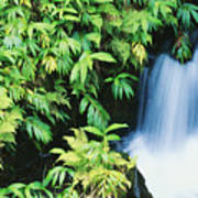 Akaka Falls State Park Poster