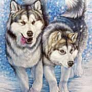 Alaskan Malamute Poster
