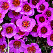Alaskan Wild Flowers Poster