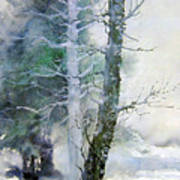 Alders And Cedar Poster