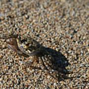 Ale Eke Ohiki Kuau Sand Crab Poster