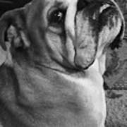 Alfred Hitchcock Bullie Pose Poster