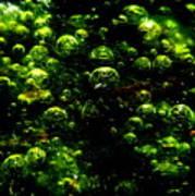 Algae Bubbles Poster by Catherine Natalia  Roche