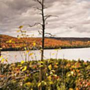 Algonquin Autumn Poster
