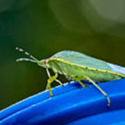 Alice The Stink Bug 2 Poster