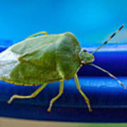 Alice The Stink Bug 3 Poster