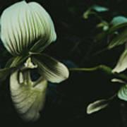 Alien Flower Poster