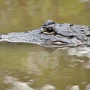 Alligator Stealth Poster