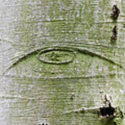 All-seeing Eye Of God On A Tree Bark Poster