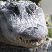 Alligator Smile Poster