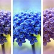 Allium Triptych Poster