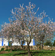 Almond Tree Cottage Poster