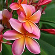 Aloha Lei Pua Melia Keanae Poster