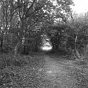 Along A Woodland Path Poster