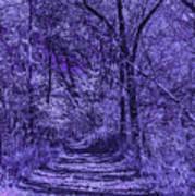 Along The Windowpane Path Poster