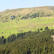 Alpine Forest Landscape.  Poster