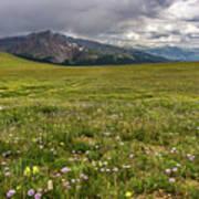 Alpine Meadow Before Mount Guyot Poster