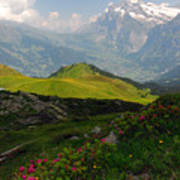 Alpine Roses In Foreground Poster