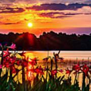 Amaryllis At Sunrise Over Lake Poster