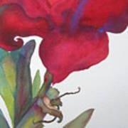 Amaryllis 2 Poster