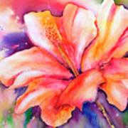 Amaryllis Flower Poster