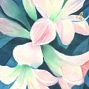 Amaryllis Poster
