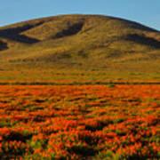 Amazing Poppy Fields Poster
