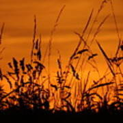 Amber Sundown Meadow Grass Silhouette  Poster