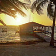 Ambergris Cayr Sunrise Palm Trees San Pedro Belize Poster