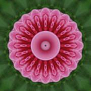 America Climbing Rose Kaleidoscope Poster