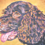 America Water Spaniel Poster