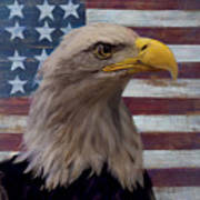 American Bald Eagle And American Flag Poster