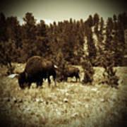 American Bison Vintage 2 Poster