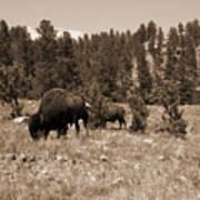 American Bison Vintage Poster