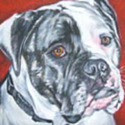American Bulldog Poster