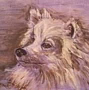 American Eskimo Dog Poster