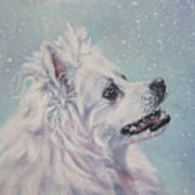 American Eskimo Dog In Snow Poster